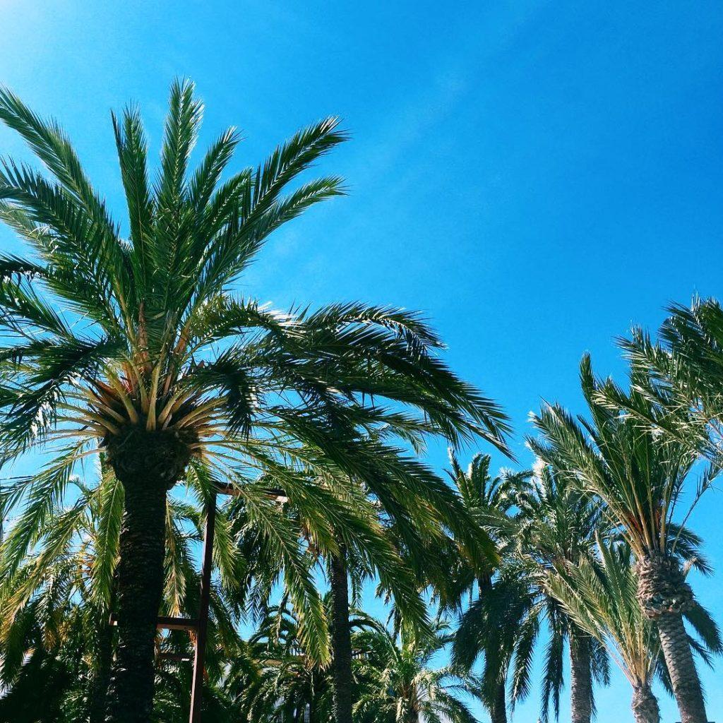 Palms on my head walkingaround palms napoli runninggirl runnerslife landscaperhellip