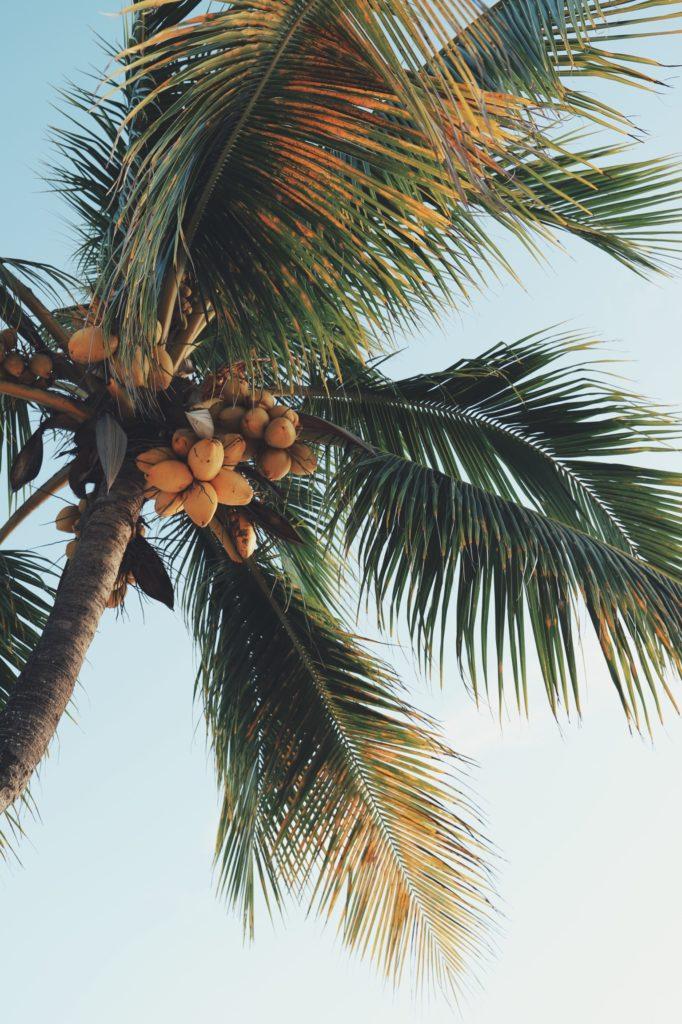 palme spiaggia mauritius