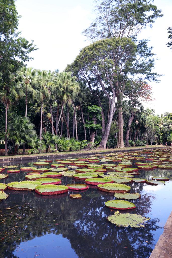 giardino botanico mauritius