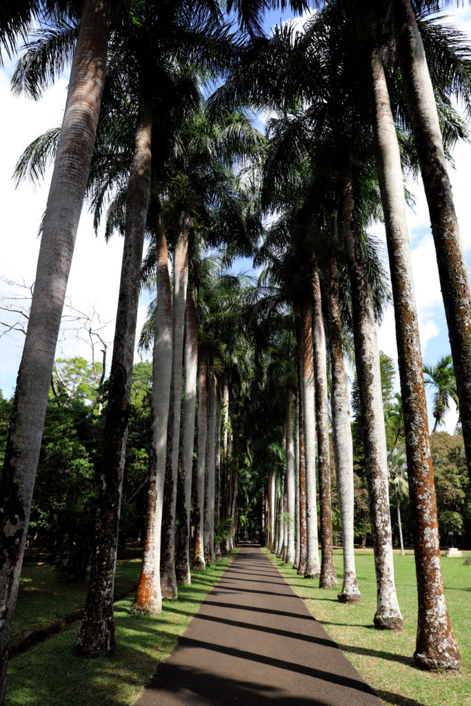 palme orto botanico mauritius